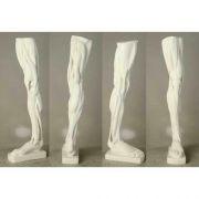 Anatomical Leg - Fiberglass Resin - Indoor/Outdoor Statue/Sculpture