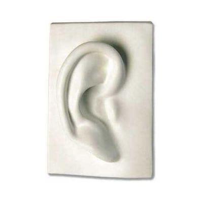 Right Ear 7in. - Fiberglass - Indoor/Outdoor Statue/Sculpture -  - DC900