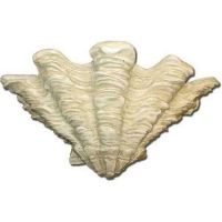 Shell Sconce 9in. - Fiberglass - Indoor/Outdoor Garden Statue