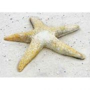 Starfish Giant Wall 30in. Fiber Stone Resin Indoor/Outdoor Statue