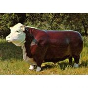 Western Steer - Fiberglass - Indoor/Outdoor Statue/Sculpture